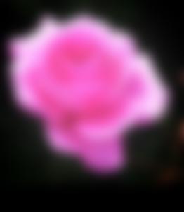 Photo d'une rose illustrant une vision floue
